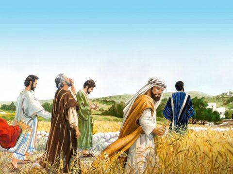 Ev. Matei capitolul 12, versetele 3-21. Iisus Hristos dezleagă sâmbăta